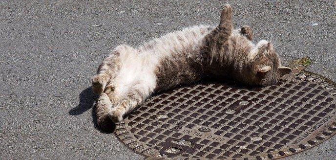 Artykuł: Sołtys stanął przed sądem, bo... nie dopilnował kota