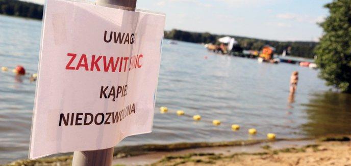 Artykuł: Sinice z jednych kąpielisk ustąpiły, na innych się pojawiły. Sprawdź, które  kąpieliska są otwarte