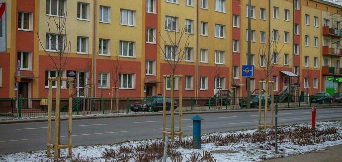 Artykuł: Kolejne ulice pięknieją. Więcej drzew na Zatorzu