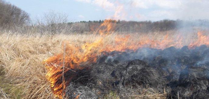 Artykuł: Stop wypalaniu traw – to grozi więzieniem!