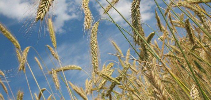 W regionie od dawna nie było dużych opadów. Czy susza dotknie rolników?