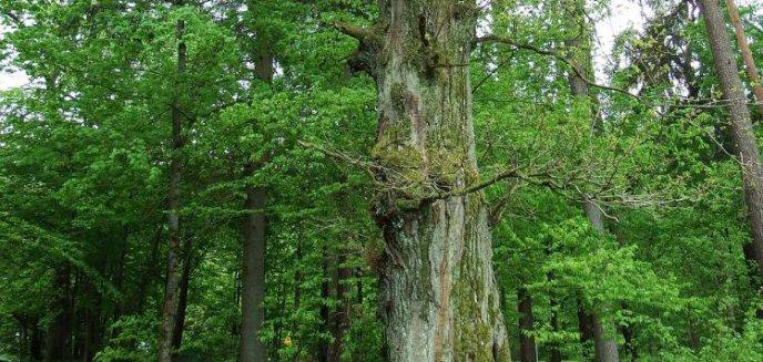 Leśnicy przegrali walkę z aeroklubem. Z Dajtek zniknie 21 hektarów lasu