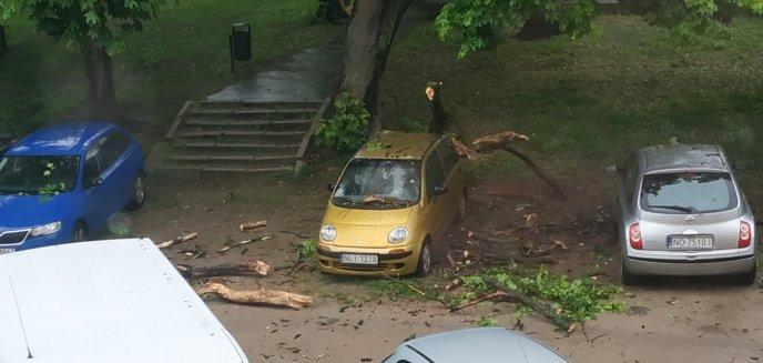 Artykuł: Drzewo spadło na samochód. Co w takiej sytuacji robić?