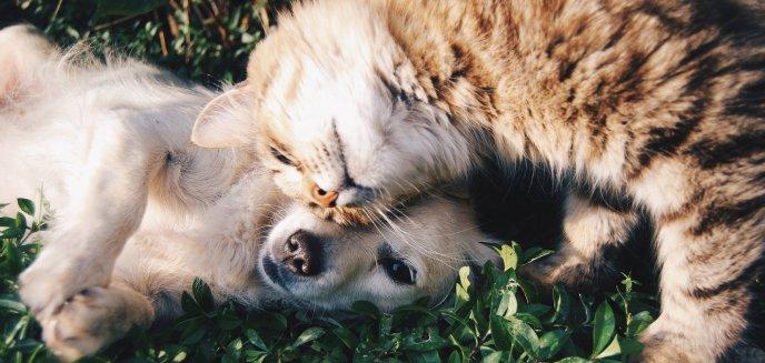 Porzucenie zwierzęcia przed urlopem to nie rozwiązanie. Grożą za to poważne konsekwencje