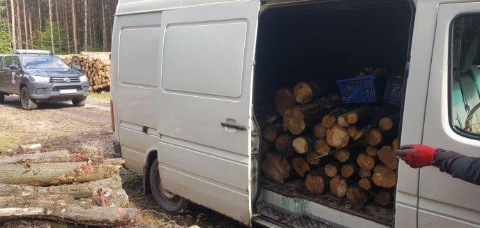 Artykuł: Kradł drzewo z lasu. Wpadł przez ''prawdziwkową pokusę''