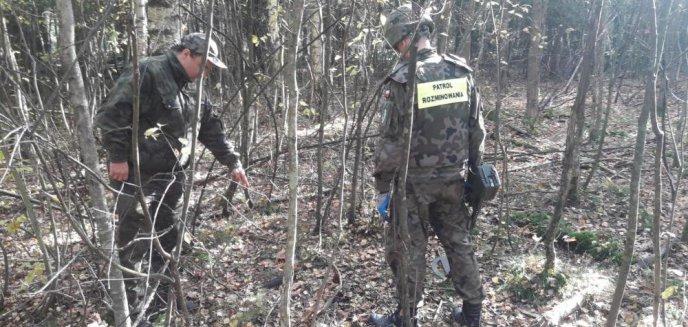 Co można znaleźć w lesie oprócz grzybów? Pociski, granaty, amunicję... [ZDJĘCIA]