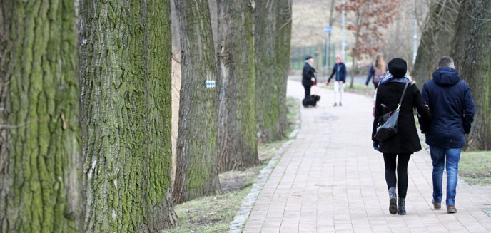 Artykuł: Bezpieczniej nad jeziorem Długim? Będą wspólne ścieżki dla pieszych i rowerzystów