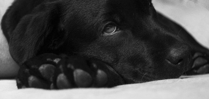 Artykuł: Wścieklizna u psa. Jak ją rozpoznać?