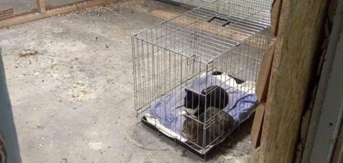 Artykuł: Skandal w papugarni w Olsztynie. Czy przebywają tam zakażone zwierzęta?