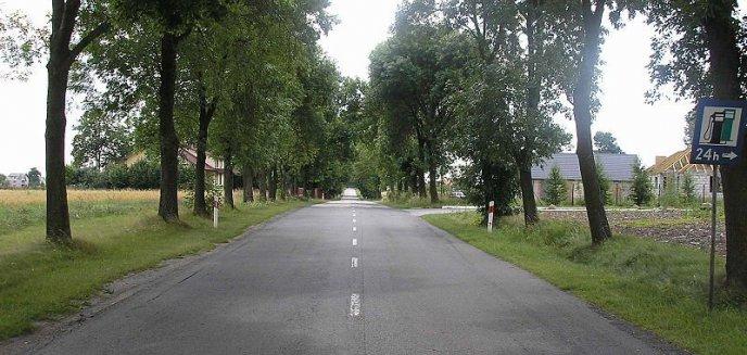 Artykuł: Przydrożni zabójcy czy zielone płuca Polski?