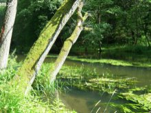 Olsztyn aniołem ekologii